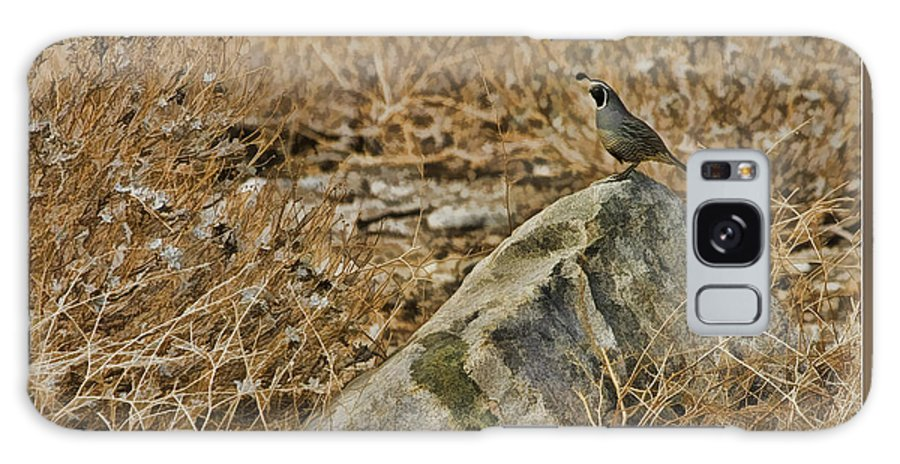 Fine Art Photographers Galaxy S8 Case featuring the photograph Quail On Rock by Blake Richards
