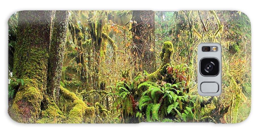Hoh Rainforest Galaxy S8 Case featuring the photograph Rainforest Salad Bar by Adam Jewell