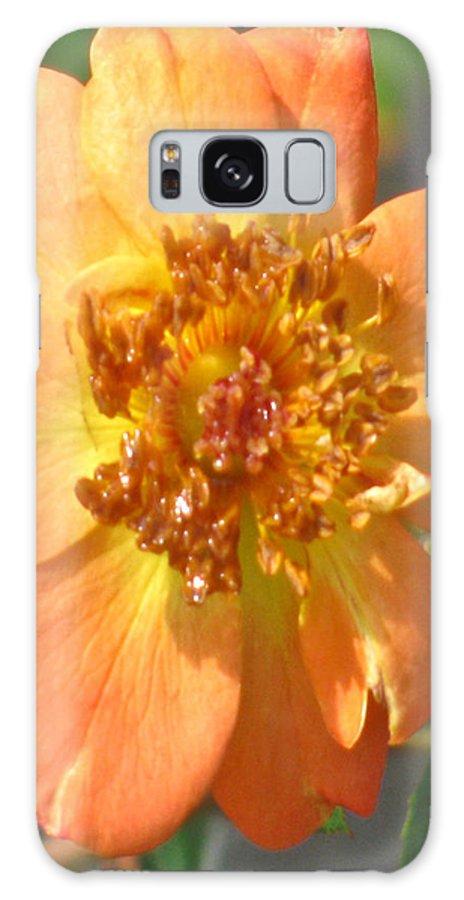 Rambling Rose Galaxy S8 Case featuring the photograph Rambling Rose by Debra   Vatalaro