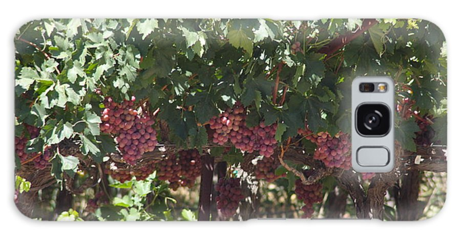 Vineyard Galaxy S8 Case featuring the photograph Ready To Harvest - Vineyard by Robin Regan