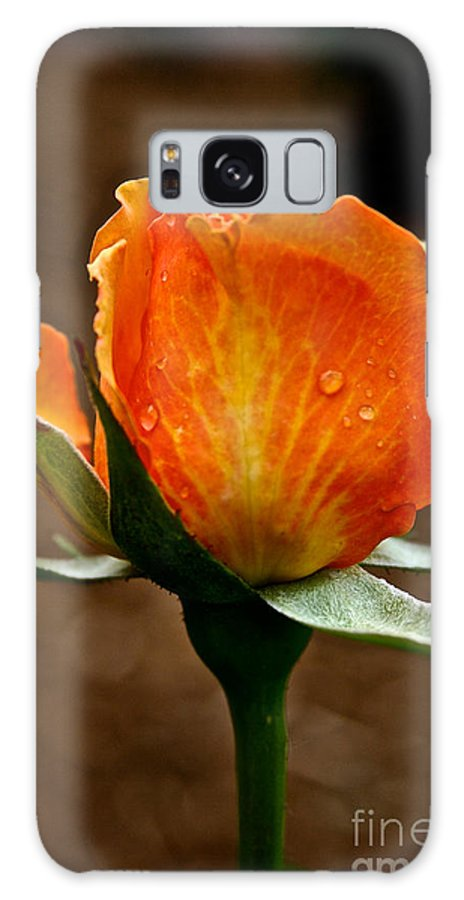 Garden Galaxy S8 Case featuring the photograph Recent Raindrops by Susan Herber