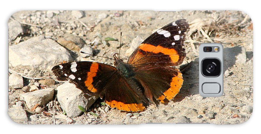 Galaxy S8 Case featuring the photograph Red Admiral by Mark J Seefeldt