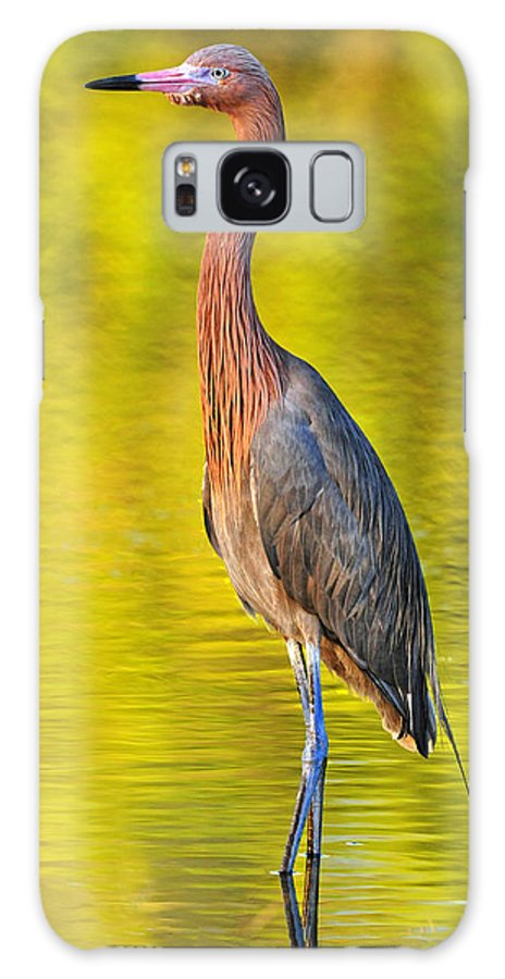 Red Egret Galaxy S8 Case featuring the photograph Red Egret In Golden Light by Dave Mills