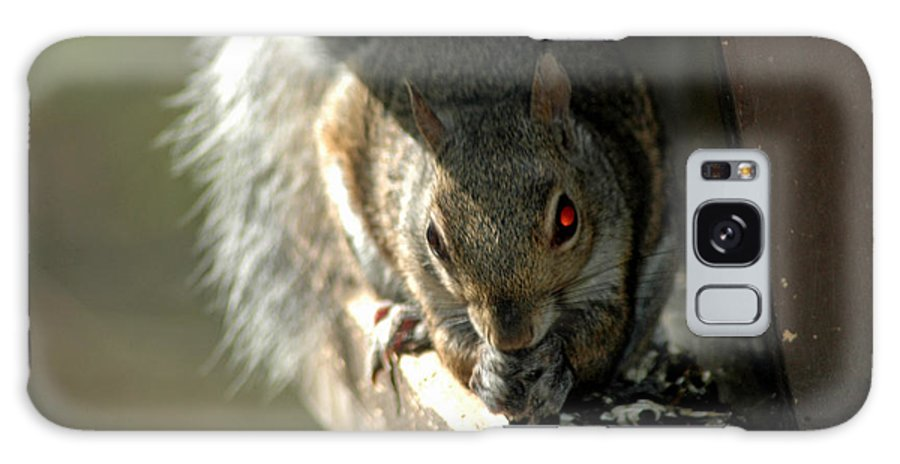 Usa Galaxy S8 Case featuring the photograph Red Eyed Demon Squirrel by LeeAnn McLaneGoetz McLaneGoetzStudioLLCcom