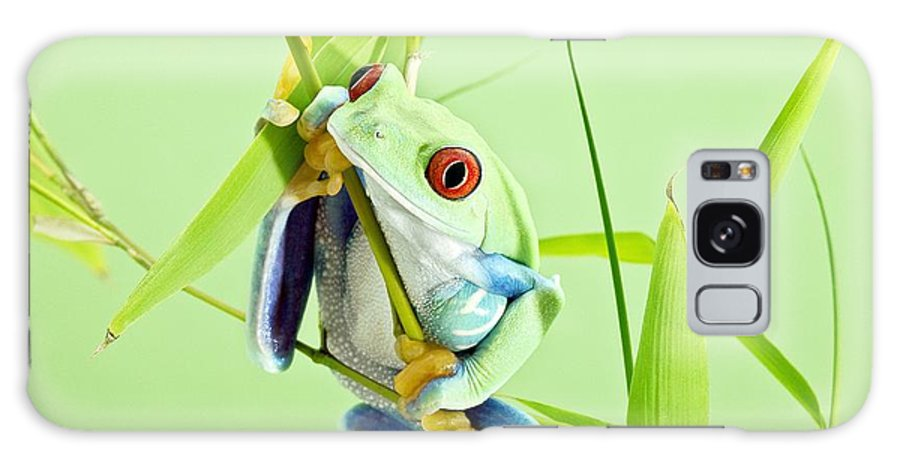 Agalychnis Callidryas Galaxy S8 Case featuring the photograph Red-eyed Tree Frog by Linda Wright