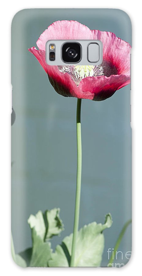 England Galaxy S8 Case featuring the photograph Red Opium Poppy by Andrew Michael
