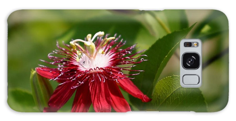 Floral Galaxy S8 Case featuring the photograph Red Passion Flower by Living Color Photography Lorraine Lynch