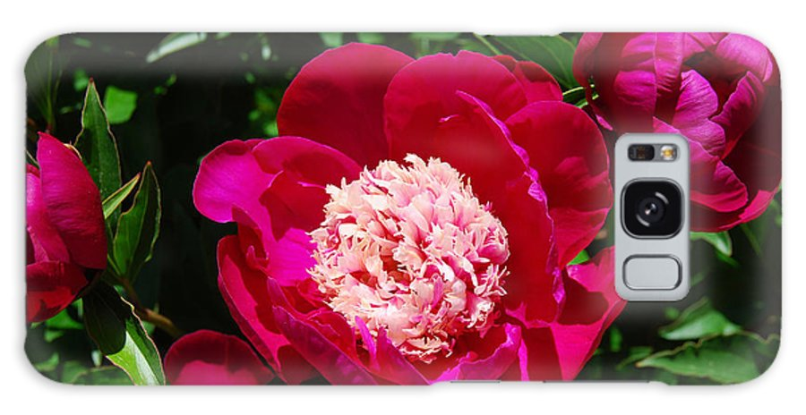Red Peony Flower Galaxy S8 Case featuring the digital art Red Peony Flowers Series 3 by Eva Kaufman