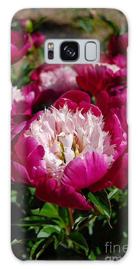 Red Peony Flower Galaxy S8 Case featuring the digital art Red Peony Flowers Series 4 by Eva Kaufman