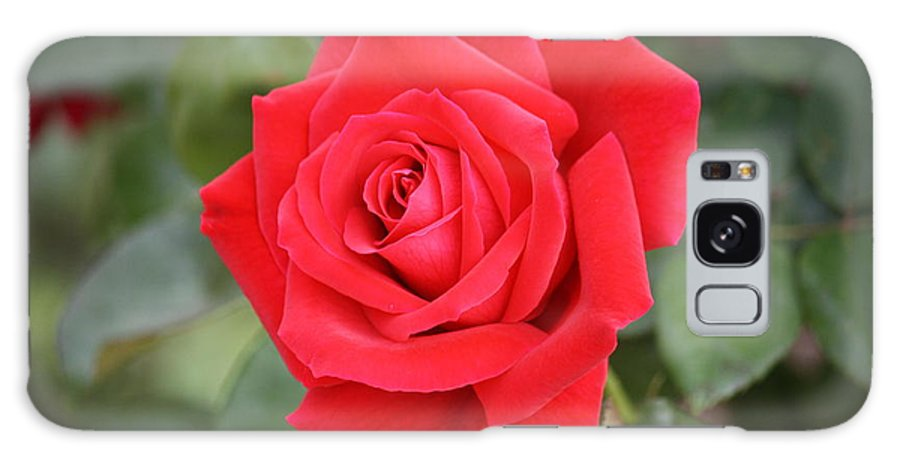 Garden Galaxy S8 Case featuring the photograph Red Rose by Donna Smith