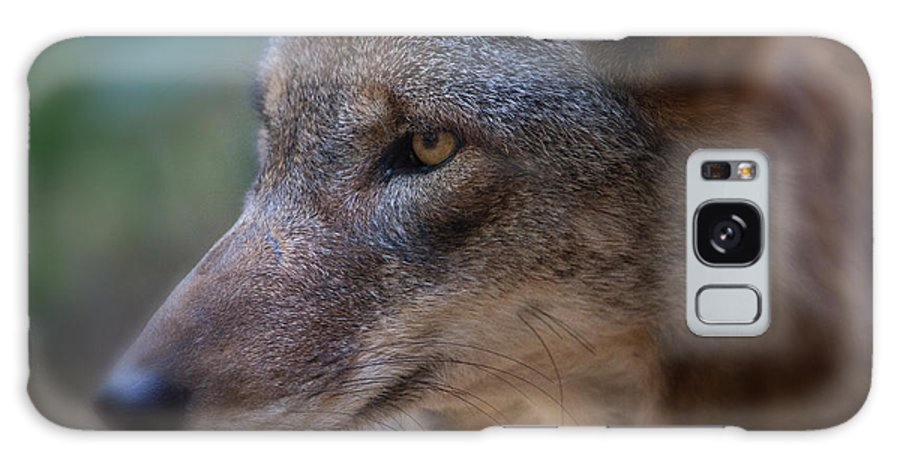 Wolf Galaxy S8 Case featuring the photograph Red Wolf Stare by Karol Livote