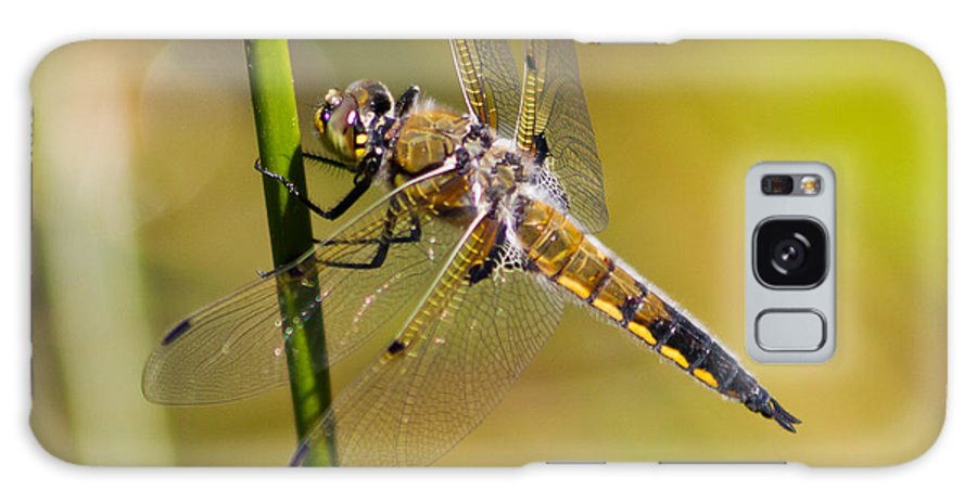 Resting Dragonfly Galaxy S8 Case featuring the photograph Resting Dragonfly by Mitch Shindelbower