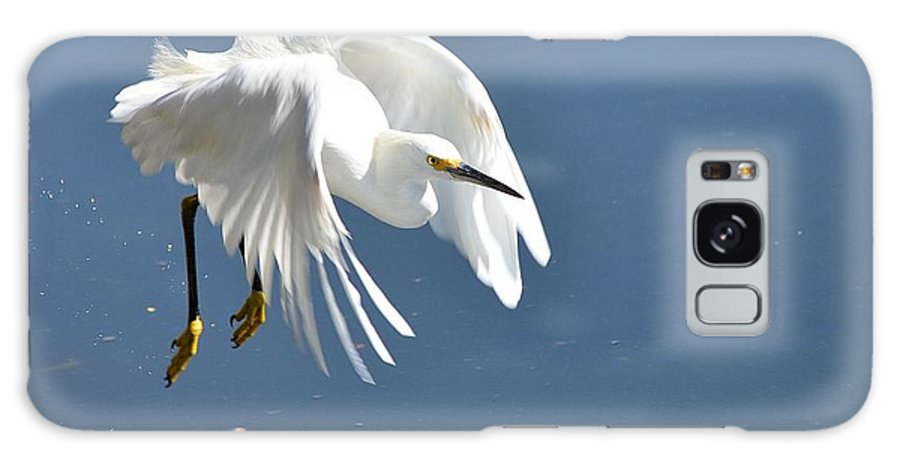 Snowy White Egret Galaxy S8 Case featuring the photograph Revved Up by Fraida Gutovich