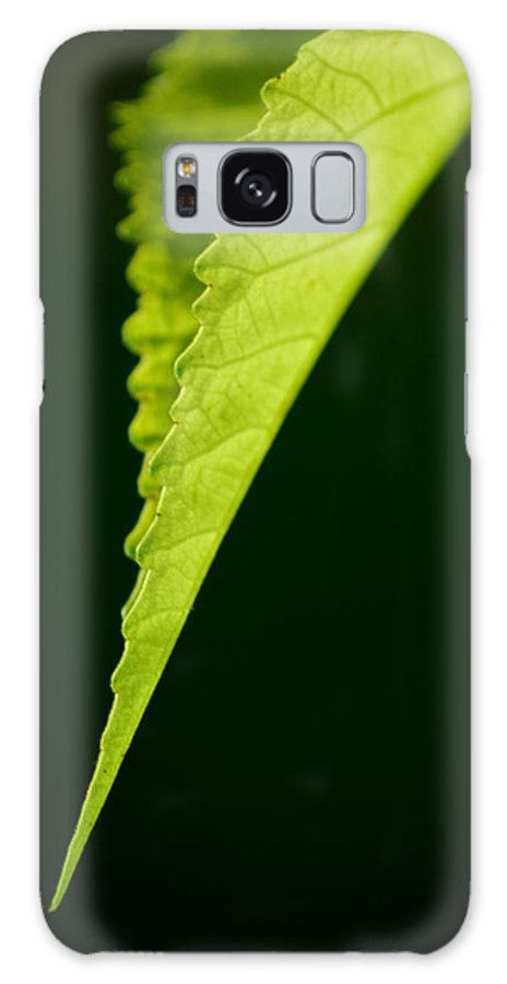 Leaf Galaxy S8 Case featuring the photograph Rigid by David Weeks