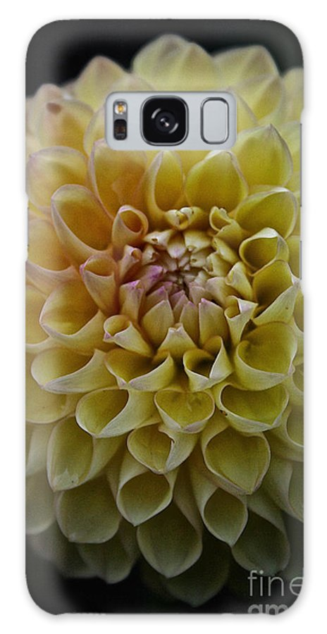 Dahlia Galaxy S8 Case featuring the photograph Robin Hood Yellow by Susan Herber