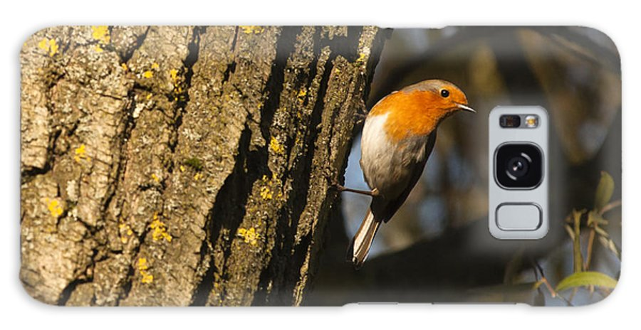 Britain Galaxy S8 Case featuring the photograph Robin On Tree by Andrew Michael