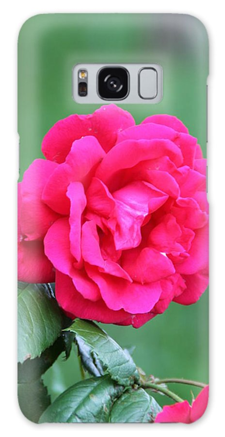 Rose Flower Galaxy S8 Case featuring the photograph Rose by Edward Gallegos