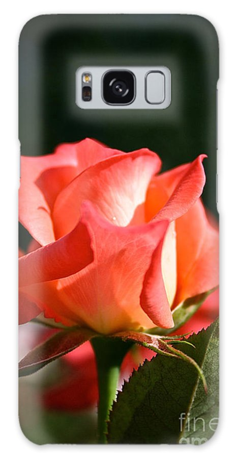 Plant Galaxy S8 Case featuring the photograph Rosebud Folklore by Susan Herber