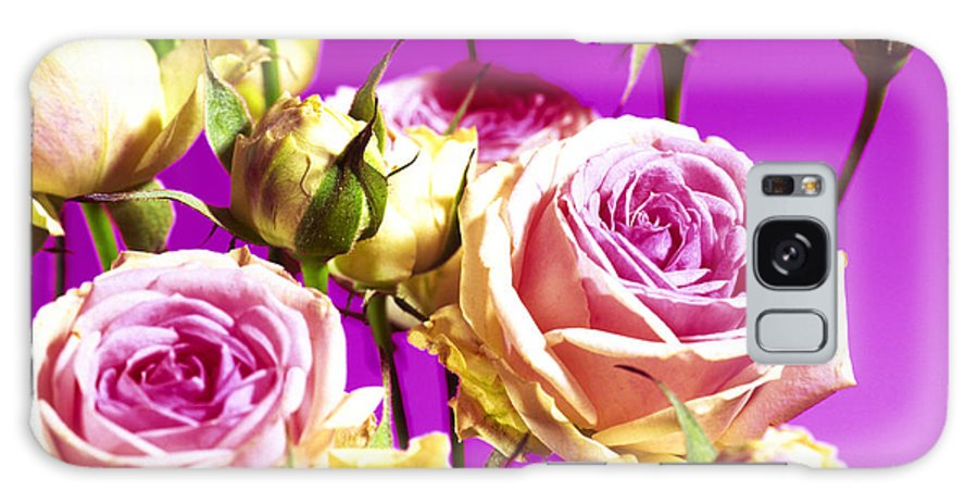 Rosa Sp. Galaxy S8 Case featuring the photograph Roses (rosa Sp.) by Johnny Greig