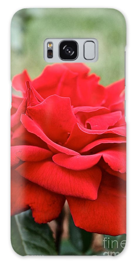 Garden Galaxy S8 Case featuring the photograph Royal Red Rose by Susan Herber