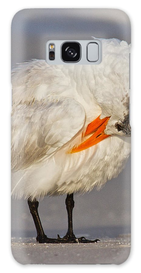 Sandwich Galaxy S8 Case featuring the photograph Royal Tern by Betsy Knapp