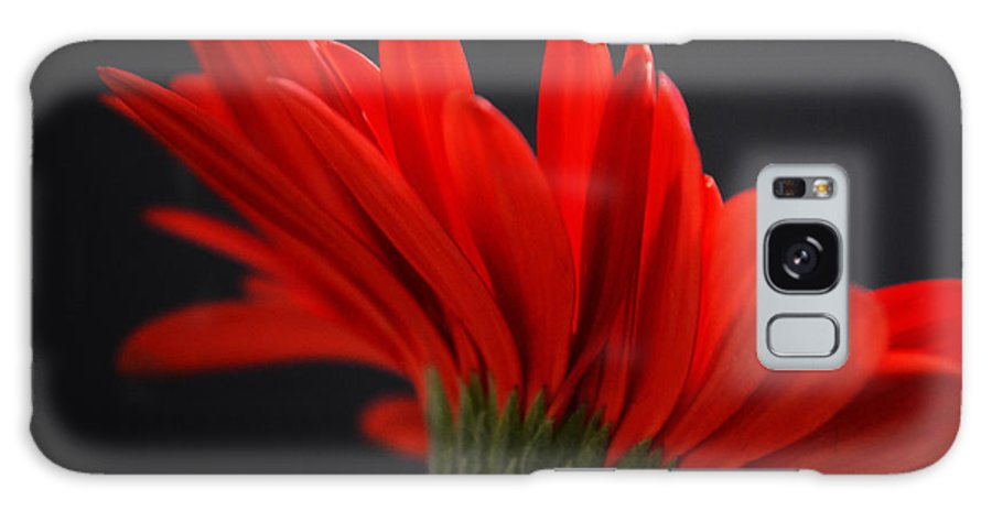 Gerber Daisy Galaxy S8 Case featuring the photograph Ruby Red by Melanie Moraga