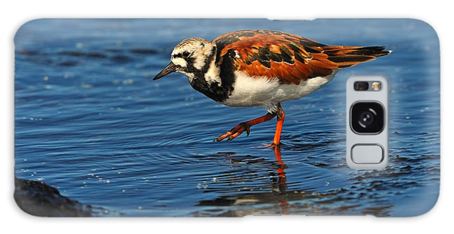 Ruddy Turnstone Galaxy S8 Case featuring the photograph Ruddy Turnstone by Tony Beck