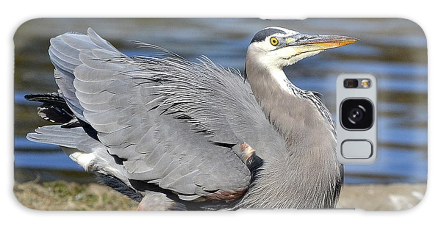 Great Blue Heron Galaxy S8 Case featuring the photograph Ruffled by Fraida Gutovich
