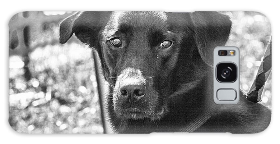 Dog Galaxy S8 Case featuring the photograph Sad Eyes by Eunice Gibb