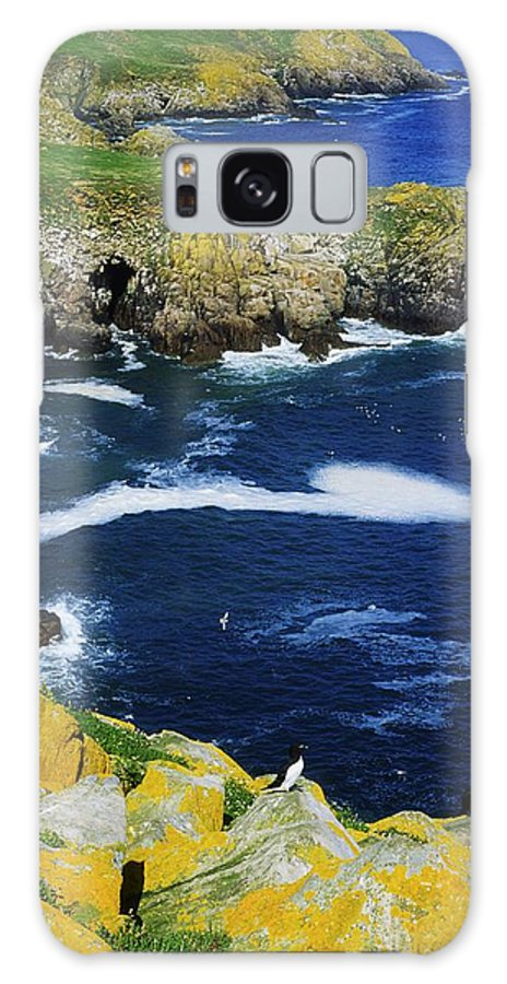 Bird Galaxy S8 Case featuring the photograph Saltee Islands, Co Wexford, Ireland by The Irish Image Collection