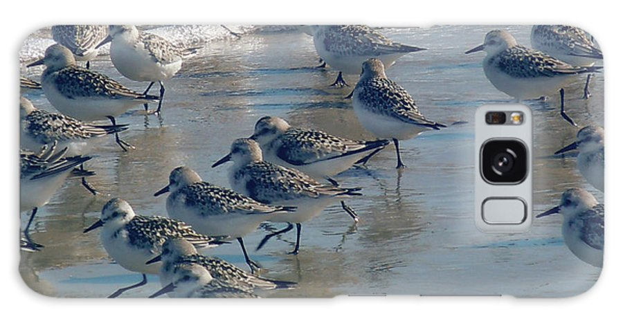 Birds Galaxy S8 Case featuring the photograph Sanderlings by Nancy Griswold