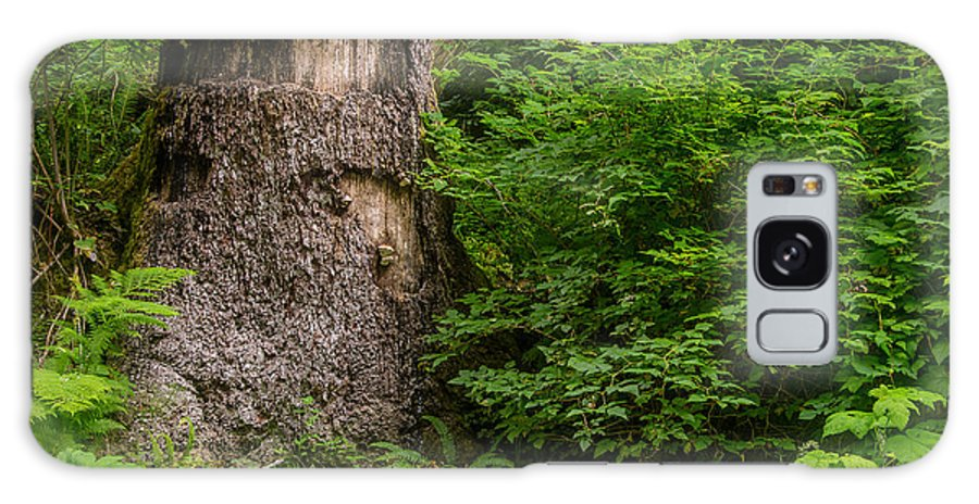 Fern Canyon Galaxy S8 Case featuring the photograph Sasquatch Rubbing Tree by Greg Nyquist