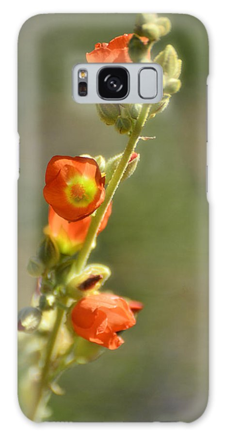 Scarlet Globe-mallow Galaxy S8 Case featuring the photograph Scarlet Globe-mallow by Saija Lehtonen