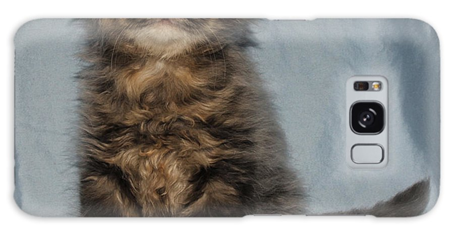 Animals Galaxy S8 Case featuring the photograph Scottish Fold 2011 by Robert Morin