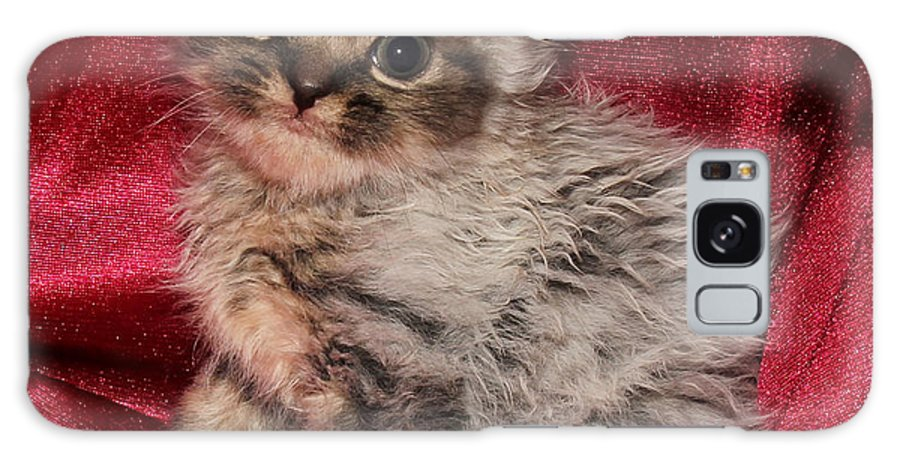 Animals Galaxy S8 Case featuring the photograph Scruffy Fold 2011 3 by Robert Morin