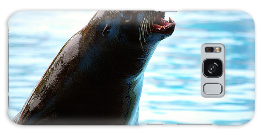 Animal Galaxy S8 Case featuring the photograph Sea-lion by Carlos Caetano