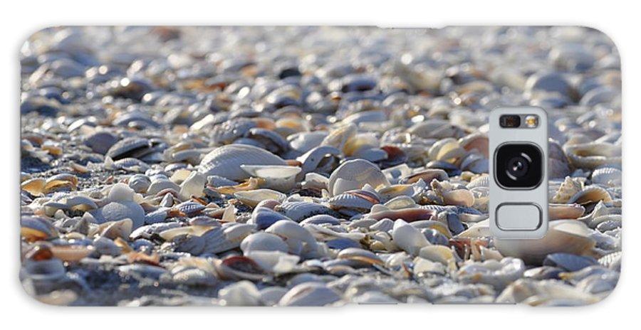 Seashells Galaxy S8 Case featuring the photograph Seashells by Joe Freeman
