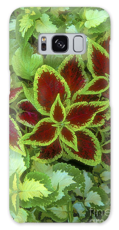 Bronstein Galaxy S8 Case featuring the photograph Sedona Floral by Sandra Bronstein