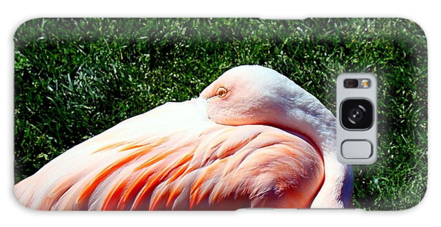 Flamingo Galaxy S8 Case featuring the photograph Shades Of Red by Nick Kloepping