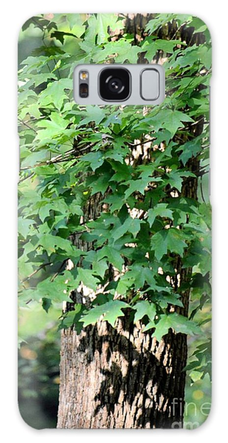 Shadows Of The Sweet Gum Galaxy S8 Case featuring the photograph Shadows Of The Sweet Gum by Maria Urso