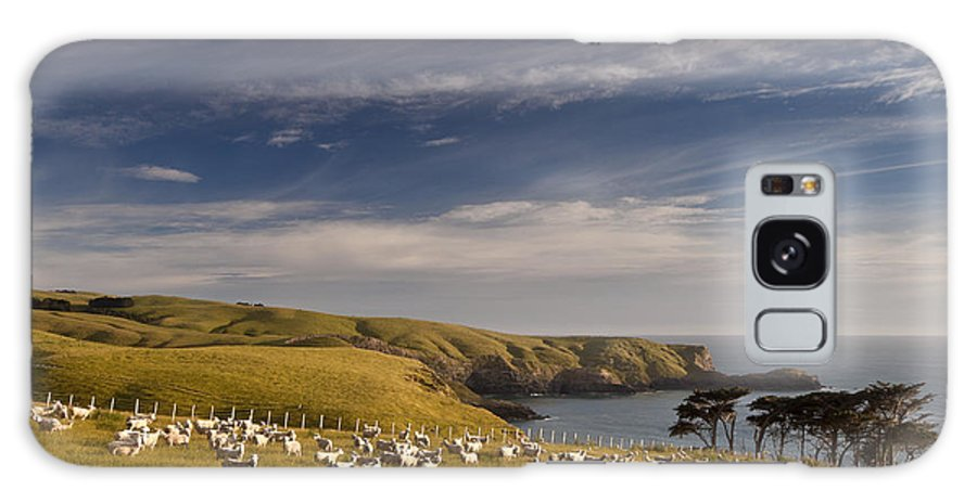 00479627 Galaxy S8 Case featuring the photograph Sheep Grazing In Headland by Colin Monteath