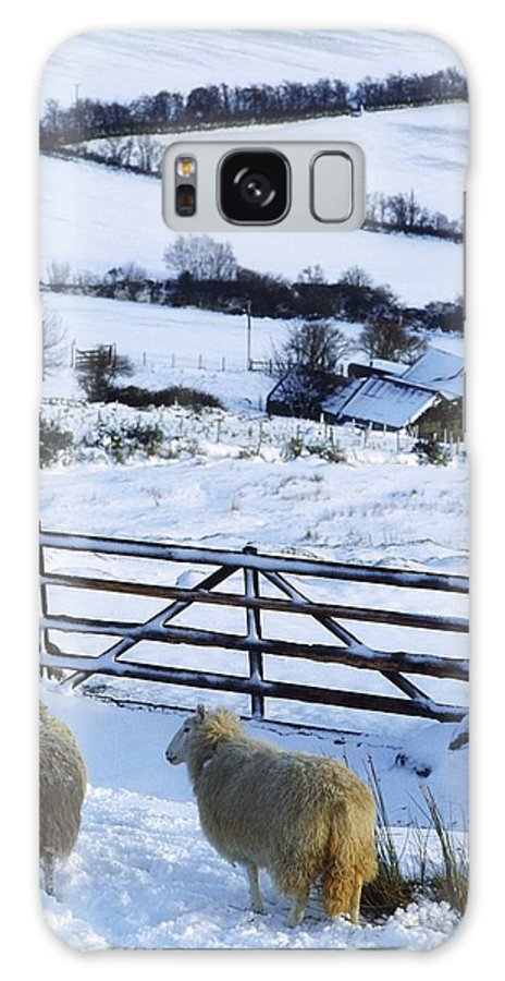 Winter Galaxy S8 Case featuring the photograph Sheep, Ireland Sheep And A Farm During by The Irish Image Collection