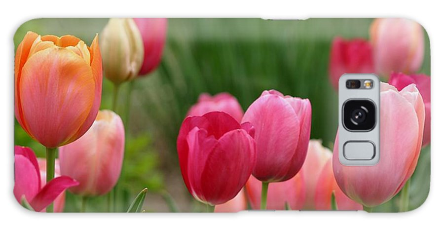 Flowers Galaxy S8 Case featuring the photograph Sherbert Color Tulips by Living Color Photography Lorraine Lynch
