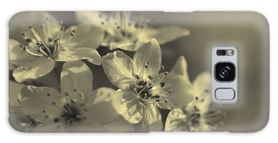 Calleryanna Galaxy S8 Case featuring the photograph Shimmering Callery Pear Blossoms by Kathy Clark