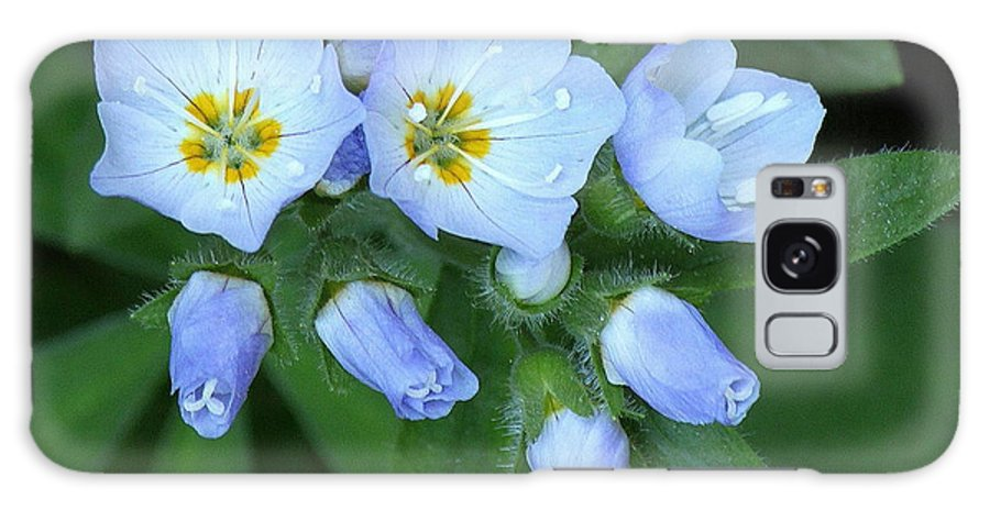 Flower Galaxy S8 Case featuring the photograph Showy Jacob's Ladder by Angie Vogel