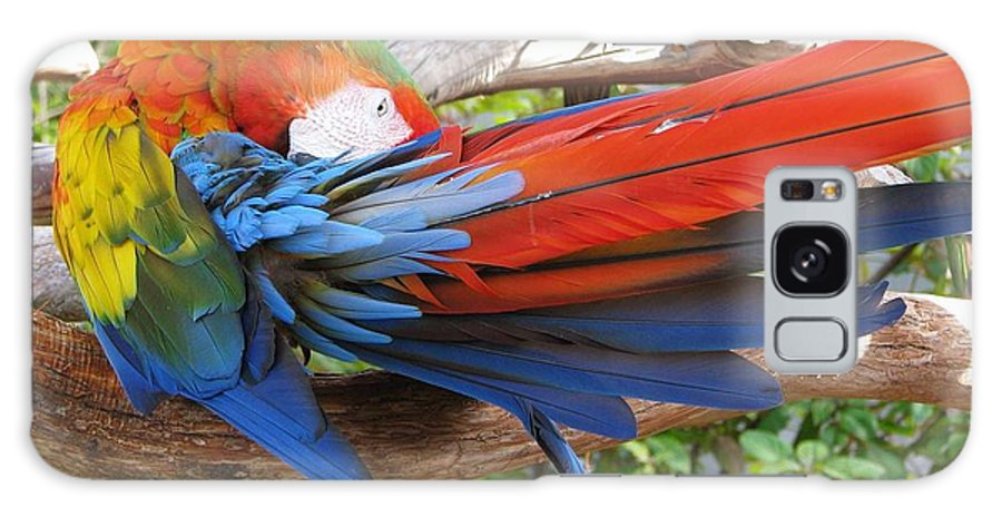 Parrot Galaxy S8 Case featuring the photograph Shy by Patricia Blake
