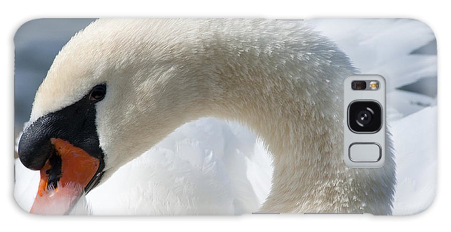 Animal Galaxy S8 Case featuring the photograph Shy Swan by Andrew Michael