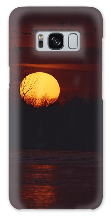United States Of America Galaxy S8 Case featuring the photograph Silhouetted Sandhill Cranes Fly by Tom Murphy