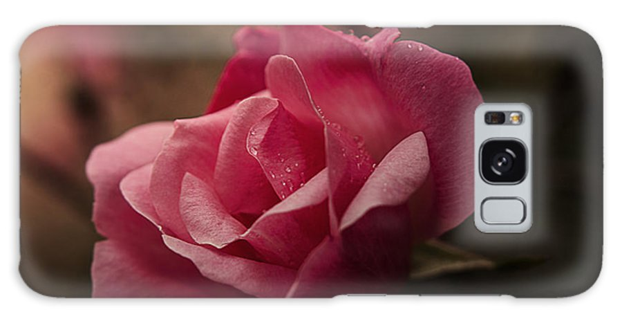 Pink Galaxy S8 Case featuring the photograph Single Rose by Kelly Rader