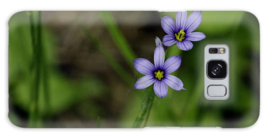 Galaxy S8 Case featuring the photograph Sisters Of The Purple Plants by LeeAnn McLaneGoetz McLaneGoetzStudioLLCcom